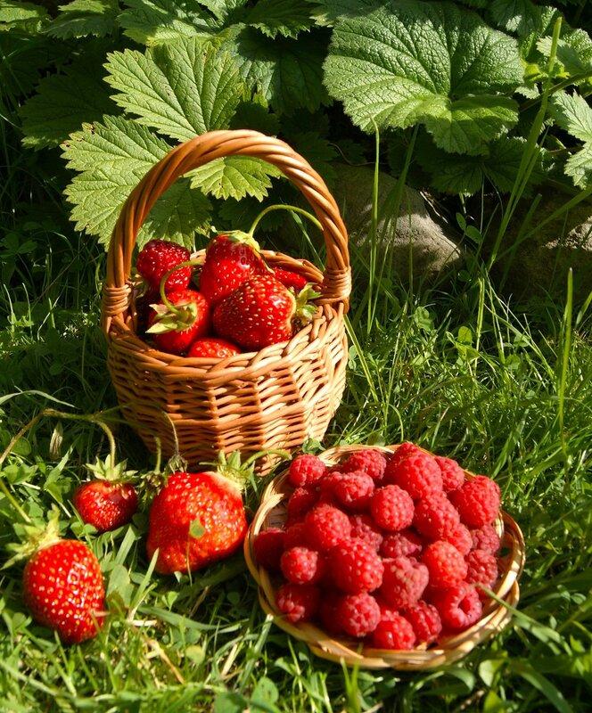 летние ягодки картинки недавно нашем